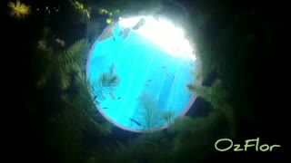 Relaxing Music - My covidhoax lockdown water tank with small fishes