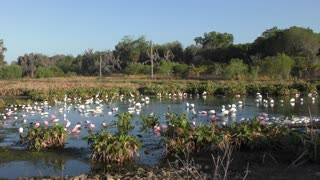 birds feeding in Florida wetlands