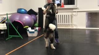 Sweet Dog Learns Dance Steps
