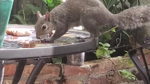 Eat and Run Squirrel