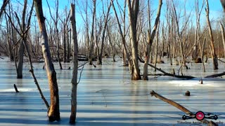 Drone footage captures relaxing footage of frozen swamp