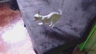 Doggy Spins Into a Frenzy Over Taco Treat