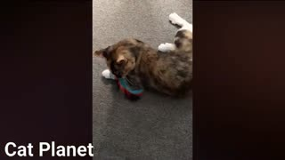 cats being funny videos
