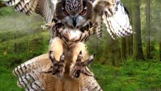 Beautiful owl flight.