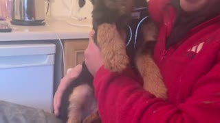 Vocal pup makes the cutest sounds you''ll ever hear