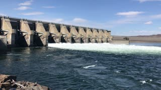 Spilling water at a Columbia River Dam