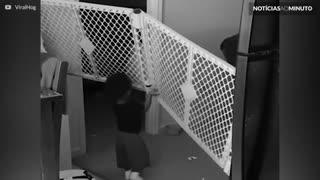 Bebê 'ninja' escapa de cercado com muita facilidade