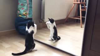 This Cute Cat Has Got Moves