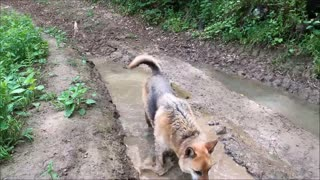 Dog playing on dirty water