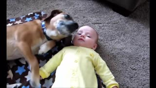 Unconditional love between a cute dog and a child