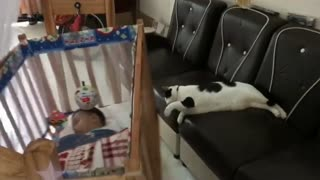 Kittens lull the baby to sleep