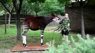 Pesan a los animales del Zoológico de Londres