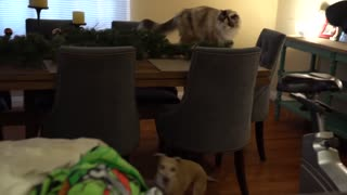 DOG meets a CAT for the first time