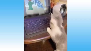 video of pets having fun together