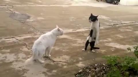 Animais incrível qui vc vai si surpresa