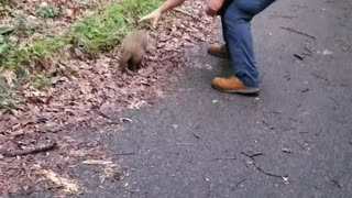 Groundhog Gets a Helping Hand