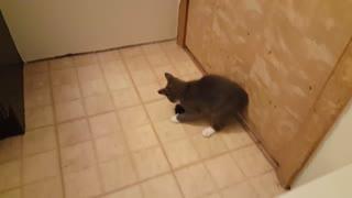 Gray Kitten Playing