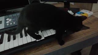 Keyboard Kitty Creates Suspenseful Tune