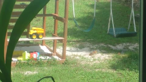 Happy bird enjoys backyard sand bath