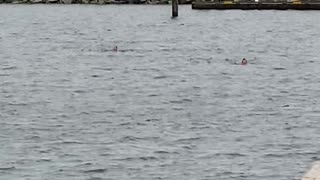 Polar Bear Swim - Cold Water Swimming