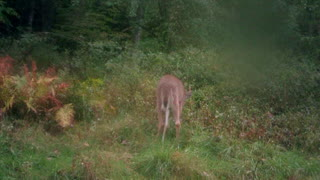 young 5 point grazing