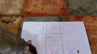 Squirrel plays tic-tac-toe with owner