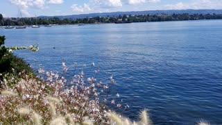Flower in Switzerland in swiss lake