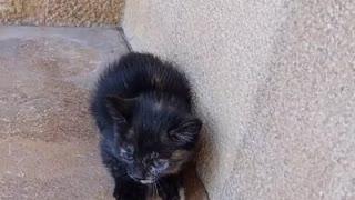 Homeless meow2