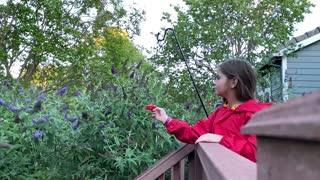 Little Girl is a Hummingbird Whisperer