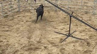 Cowboy Teeter Totter
