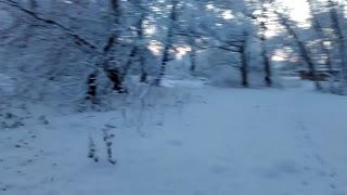 Beautiful winter park