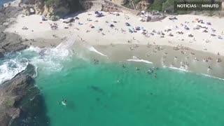 Filhote de baleia nada com banhistas em praia na Califórnia
