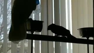 Playful Bird Boops Friend with Bottle