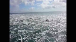 Witnessing an Enormous Dolphin Stampede