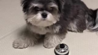 Cute puppy recieve a treat after ordering food with ringbell