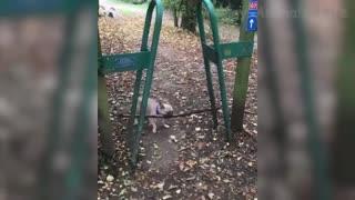funny animal scenes 2021