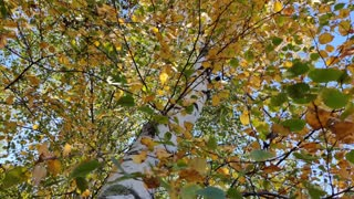 Autumn Photography 2020 ( Part 2 )