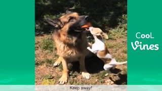 Funny Cat & Dog Vines compilation 20