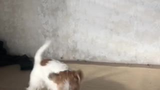 Doggo Gives Toy some Vicious Whiplash
