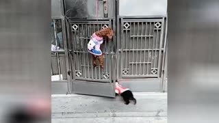 Watch how the dog opens and closes the door again