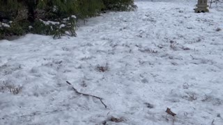 River Meets Feathers