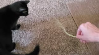 Cat playing fetch with me