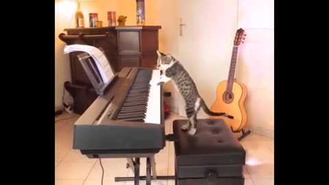 Daily cat video - 2