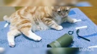 Cat Boom / Music cat /Music Dog/Videos tiktok