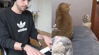 Cat Singer 😂