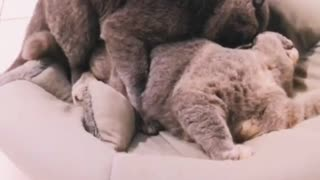Sweet Cuddle Cats