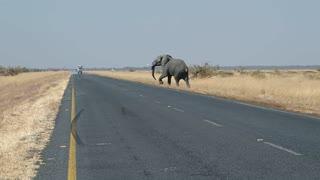 Elephant cross the road