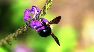 bee feeding on flowers nectar