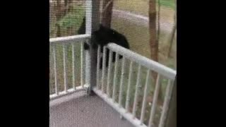Nothing to see here - just a bear cub exploring this front porch!