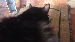 Good morning, black cat